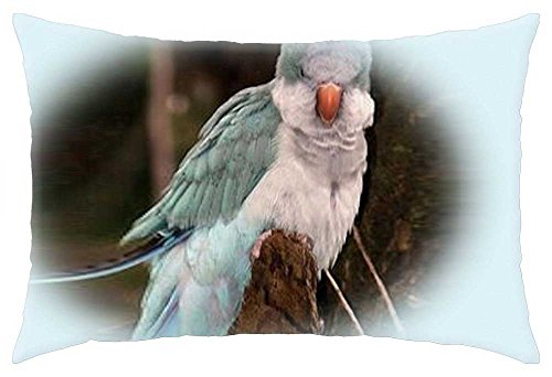 irocket-quaker-parrot-throw-pillow-cover-24-x-24