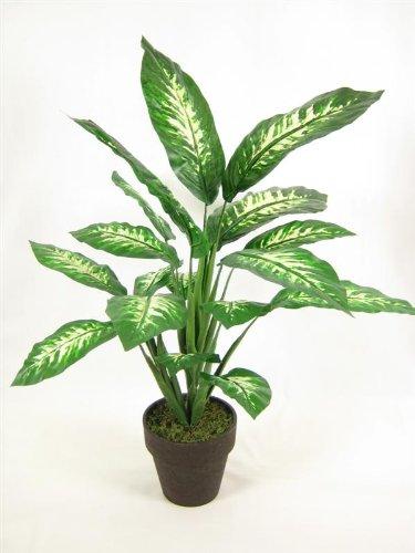 Dieffenbachia image 150 for Amazon plante artificielle