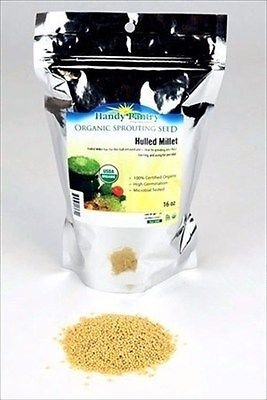 ORGANIC HULLED MILLET SEEDS -1 LB- NO HULL-CEREAL GRAIN, FOOD STORAGE, BIRDSEED