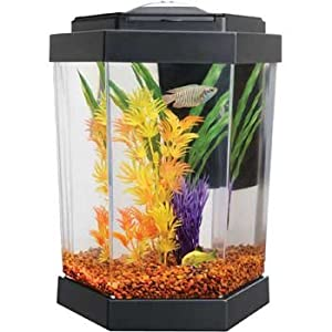 Aquatics Department Fish Aquarium Supplies & More. Create a Great Aquarium With Petco - Excludes products with Manufacturer Minimum Advertised Price. - Offer valid only at burrfalkwhitetdate.ml pop-up content ends. pop-up content starts. Close Button. Order by 12/19 to receive by 12/