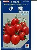 小桃  タキイのミニトマト種子です