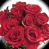 キラキラダイヤモンドローズ 赤いラメバラ花束12本 生花花束アレンジメント フラワーギフト 誕生日プレゼント 結婚記念日 結婚祝い 還暦祝い 退職祝い お祝いなどに