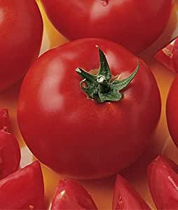 Amazon.com : Early Girl Tomato Plant- Two (2) Live Plants