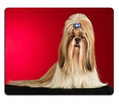 liili mauspad naturkautschuk mousepad shih tzu hund mit blau haarspange shot full face in studio. Black Bedroom Furniture Sets. Home Design Ideas