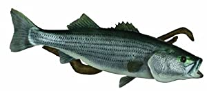 HQ Taxidermy BST46.5-DW 46.5-Inch Striped Bass Replica Wall Mount with Driftwood by HQ Taxidermy