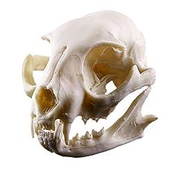 Resin Cat Skull Skeleton Figurine Aquarium Fish Tank Landscape Decoration