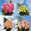 8 Dozen Assorted Color Roses & Fillers
