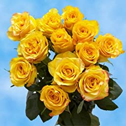 1 Dozen Fresh Cut Yellow Roses | Amazingly Radiant! | Fresh Flowers Express Delivery | Perfect for Birthdays, Anniversary or any occasion.