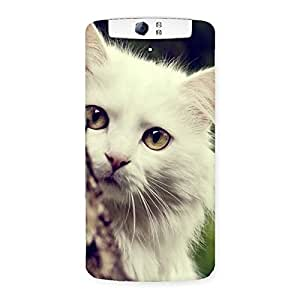 Delighted Hiding Cat Multicolor Back Case Cover for Oppo N1