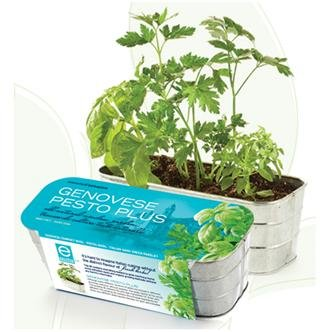 Genovese Pesto Plus Italian Herb Kit
