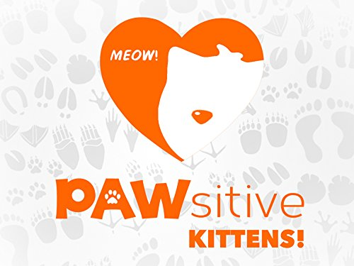 Pawsitive Kittens - Season 1