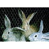 Grillage triple torsion poules lapins canards gamme eco roule - Grillage triple torsion pas cher ...
