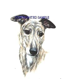 Greyhound - Portrait by Cindy Farmer