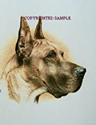 Great Dane - Portrait by Cindy Farmer