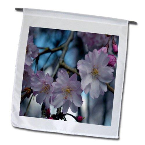 WhiteOak Photography Floral Prints - Cherry Blossom Tree - 18 x 27 inch Garden Flag (fl_45340_2)