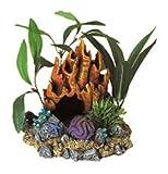 BLRIB CF Fire Coral Cav w/ Plnt