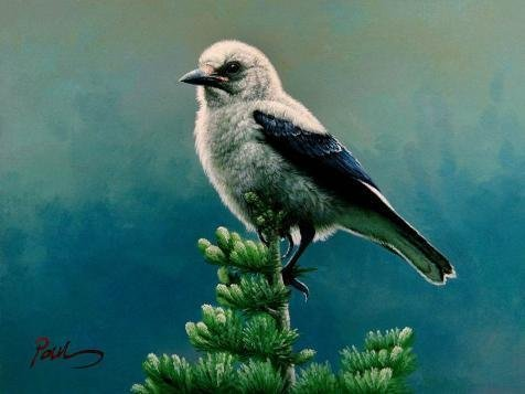 Oil Painting 'Gray Bird' Printing On Perfect Effect Canvas , 24x32 Inch / 61x81 Cm ,the Best Home Office Gallery Art And Home Gallery Art And Gifts Is This Cheap But High Quality Art Decorative Art Decorative Canvas Prints