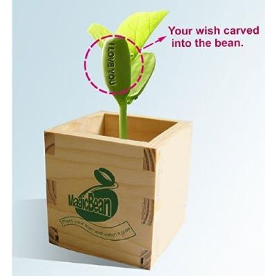 Talking Bean - I love You
