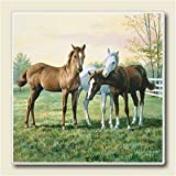 Yearlings Absorbastone Western Horse Coasters Set/4 ~ Highland Graphics