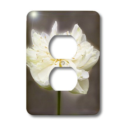 Lsp_45975_6 Vwpics Flowers - Sacred Lotus Flower.(Nelumbu Nucifera).Thailand - Light Switch Covers - 2 Plug Outlet Cover