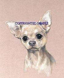 Chihuahua - Portrait by Cindy Farmer