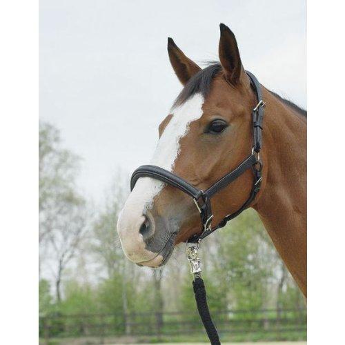BUSSE Halfter HORSE, Leder, Pony, schwarz, schwarz/Edelstahl