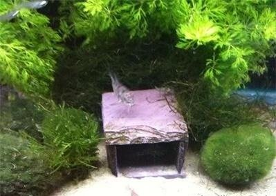 . 4X3X2 Cave Rock Decoration. Aquarium Aquascape DIY Kit, Aquarium ...