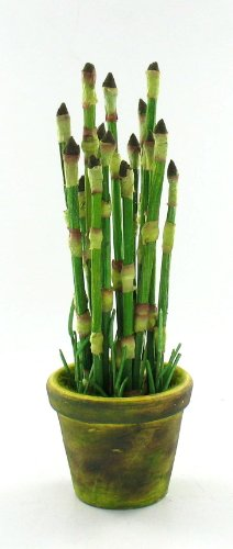 Baby Mini Bamboo Plant Pot Indoor Outdoor Table Top