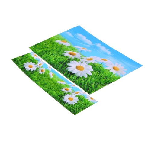 12 to 15 Sun Flower Sticker Skin Cover For Acer Sony Dell HP Laptop Notebook