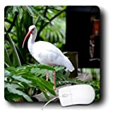 Susans Zoo Crew Animals - ibis standing on fence plants feeder - Mouse Pads