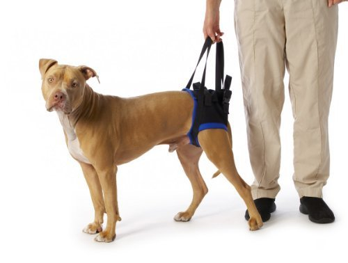 walkabout-back-pet-harness-large-by-walkabout-harnesses