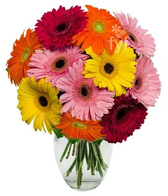 From You Flowers - Stunning Gerbera Daisies - 10 Stems (Free Vase Included) from From You Flowers