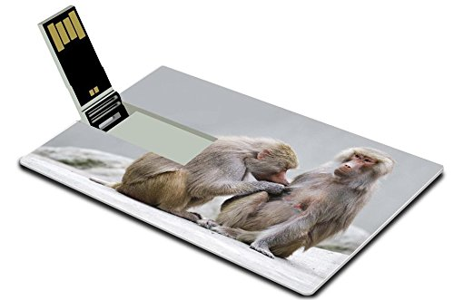 msd-4gb-usb-flash-drive-20-memory-stick-credit-card-size-image-id-14744895-two-baboons-engaged-in-mu