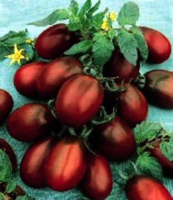 4 Plants - Black Russian Plum Tomato