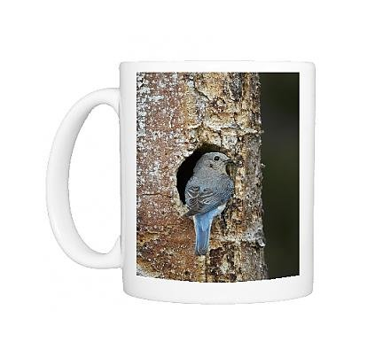 photo-mug-of-female-mountain-bluebird-sialia-currucoides-with-food-at-the-nest
