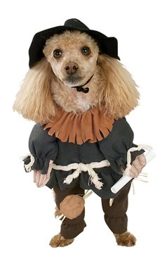 Scarecrow from the Wizard of Oz Halloween Pet