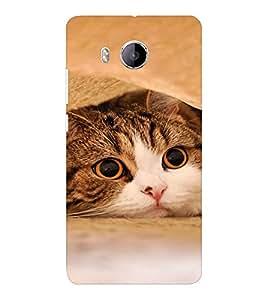 EPICCASE Cutie Cat Mobile Back Case Cover For VIVO X shot (Designer Case)