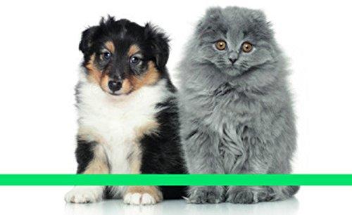 agenda-chats-et-chiens-2017
