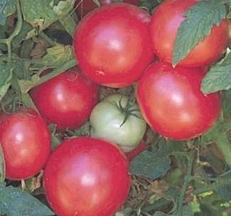 Arkansas Traveler Tomato 10 Seeds - HEIRLOOMArkansas Traveler Tomato 10 Seeds - HEIRLOOM
