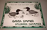 img - for Gavia Immer Splendid Swimmer book / textbook / text book
