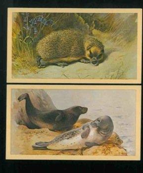 British mammals. PDF