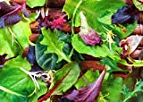 Leaf vegetable herbs seeds combo- lettuce, rocket, kale, choulai red, choulai green, palak, dhaniya 7 seeds pack combo Omaxe Brand(Avg 50+ seeds each) by Super agri Green (easy to grow in pots, herbal, terrace garden -kitchen garden