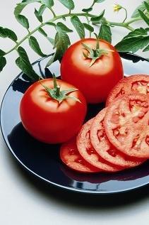 Hazzard's Seeds Tomato Goliath Bush 100 seeds (Bush Tomatoes compare prices)