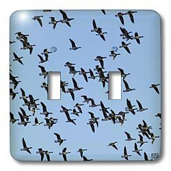 Kike Calvo Animals - Canada Geese, Branta canadensis - Light Switch Covers - double toggle switch