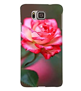 Printvisa Pink Rose With Green Background Back Case Cover for Samsung Galaxy Alpha G850