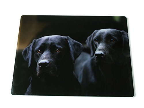 black-labradors-glass-kitchen-worktop-surface-protector-iconic-photographic-image-by-charles-sainsbu