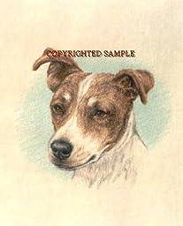 Jack Russell Terrier - Portrait by Cindy Farmer