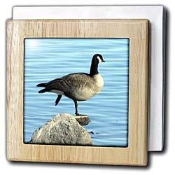 Canada Goose Photographed by Angelandspot - 6 Inch Tile Napkin Holder