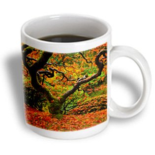 Danita Delimont - Michel Hersen - Japanese Gardens - Autumn At The Portland Japanese Garden, Portland, Oregon, Usa - 11Oz Mug (Mug_191630_1)