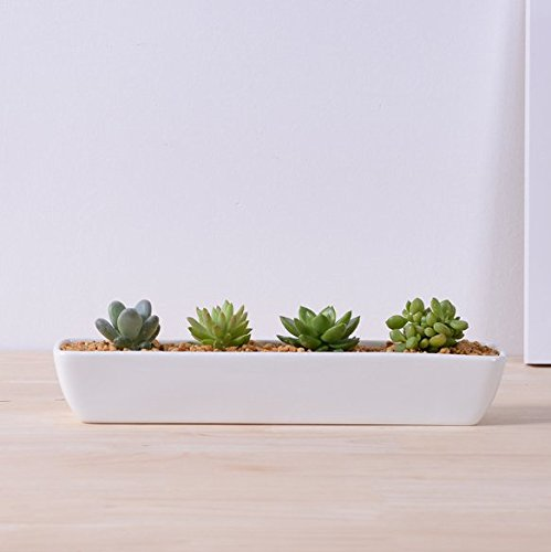 Succulent Pot, Herb Planter or Cactus Pot - White Minimalist Long Rectangular Pot - 11in x 2in x 2.3in - Indoor Outdoor Planter by Gander Lane